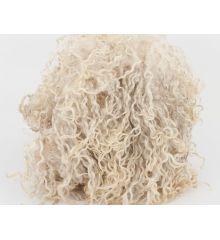 Raw Teeswater fleece & lokcs